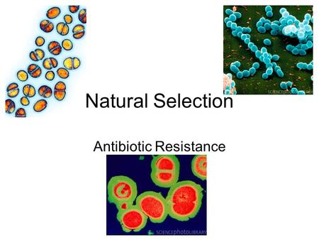 Natural Selection Antibiotic Resistance. What is Antibiotic Resistance? Watch the Video Clip about tuberculosis in Russian prisons Why is the Russian.