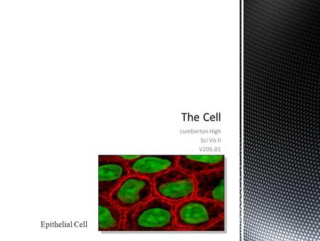 Lumberton High Sci Vis II V205.01 Epithelial Cell.