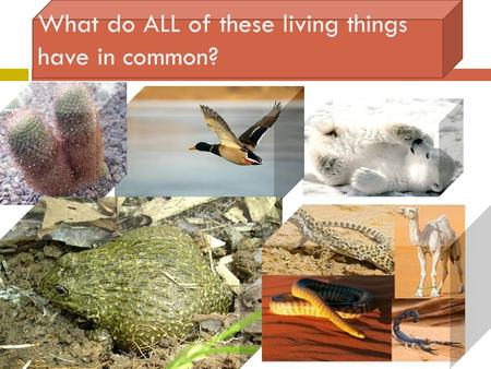 What do ALL of these living things have in common?