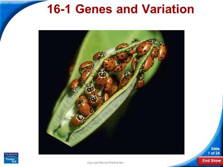 End Show Slide 1 of 24 Copyright Pearson Prentice Hall 16-1 Genes and Variation.