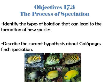 Objectives 17.3 The Process of Speciation