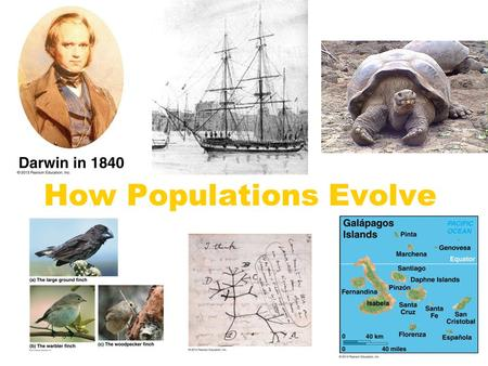 How Populations Evolve. Questions about Fossils A fossil is an impression of a life form found in a rock. How did that impression get there?