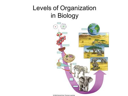 Levels of Organization in Biology. Fig. 1.08 Atoms HydrogenOxygen Cells Smallest level of organization living and non-living Example: Hydrogen Atom.