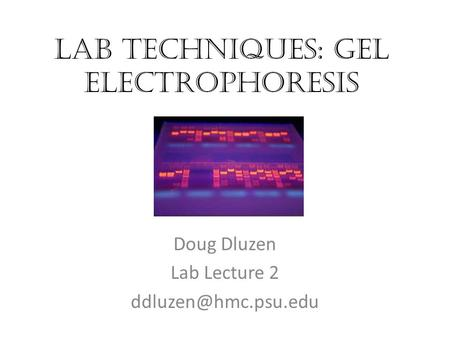 Lab Techniques: Gel electrophoresis Doug Dluzen Lab Lecture 2