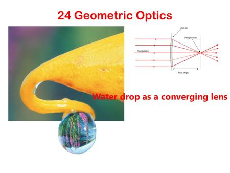 24 Geometric Optics Water drop as a converging lens.