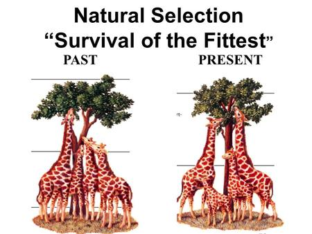 Natural Selection Survival Of The Fittest Examples