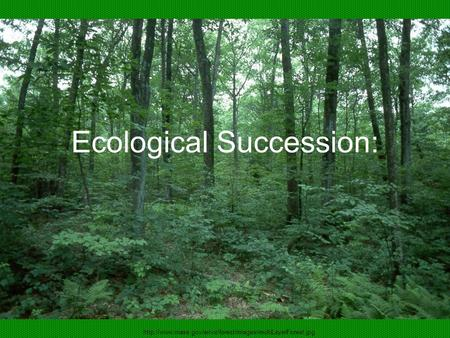 Ecological Succession: