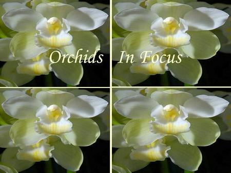 Orchids In Focus … We focus on the Lord our Creator the Maker of Heaven and Earth, He is always with us… Protecting us in the daylight and in the.