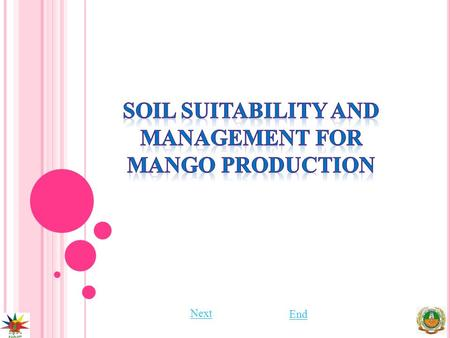 Next End. S OIL SUITABILITY AND MANAGEMENT FOR MANGO PRODUCTION PreviousNext End Mango grows on wide range of soils, such as lateritic, alluvial, sandy.