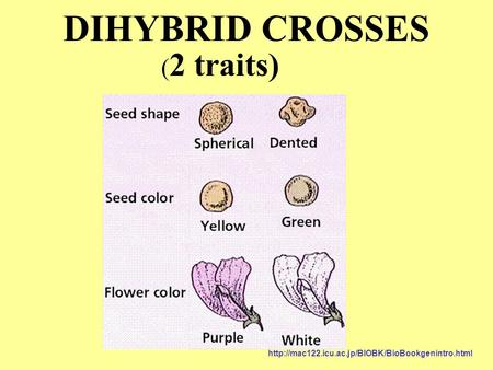 DIHYBRID CROSSES ( 2 traits)