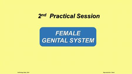 FEMALE GENITAL SYSTEM 2 nd Practical Session Reproduction block Pathology Dept, KSU.