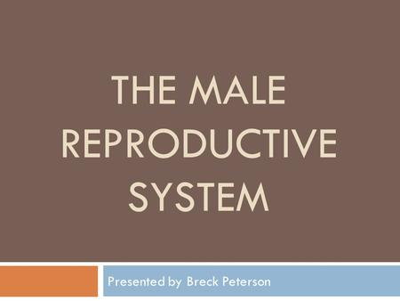 THE MALE REPRODUCTIVE SYSTEM Presented by Breck Peterson.
