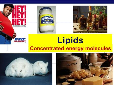 Regents Biology Lipids Concentrated energy molecules.