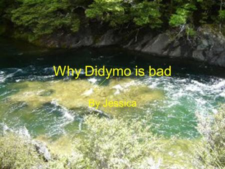 Why Didymo is bad By Jessica. What is Didymo? Didymo was discovered in NZ, the first time it was found was in the southern hemisphere. To restrict its.