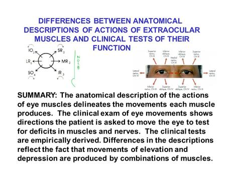 DIFFERENCES BETWEEN ANATOMICAL DESCRIPTIONS OF ACTIONS OF EXTRAOCULAR MUSCLES AND CLINICAL TESTS OF THEIR FUNCTION SUMMARY: The anatomical description.