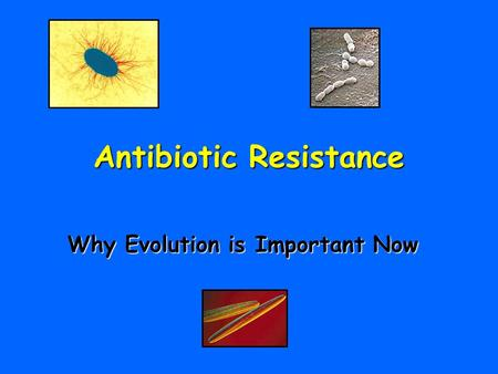 Antibiotic Resistance Why Evolution is Important Now.