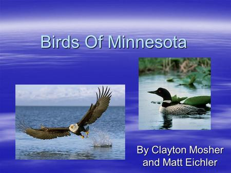Birds Of Minnesota By Clayton Mosher and Matt Eichler.