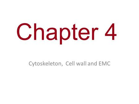 Chapter 4 Cytoskeleton, Cell wall and EMC. You Must Know The structure and function of the cytoskeleton. (You will only be tested on the parts of the.