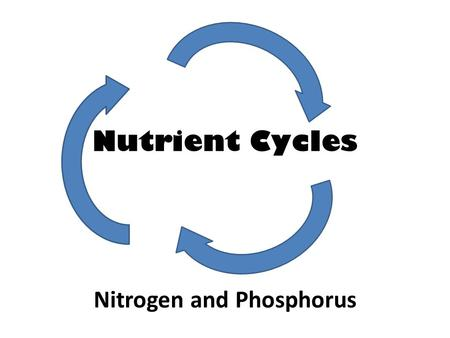 Nutrient Cycles Nitrogen and Phosphorus. WHY DO WE NEED NITROGEN?? – Nitrogen is needed to make up DNA and protein! In animals, proteins are vital for.