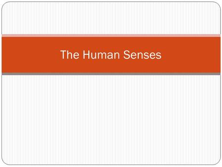 The Human Senses. How does our body enable us to TASTE & SMELL? Sensory nerves associated with taste and smell are located in the mouth and nasal cavity.