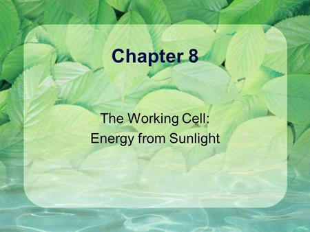 Chapter 8 The Working Cell: Energy from Sunlight.