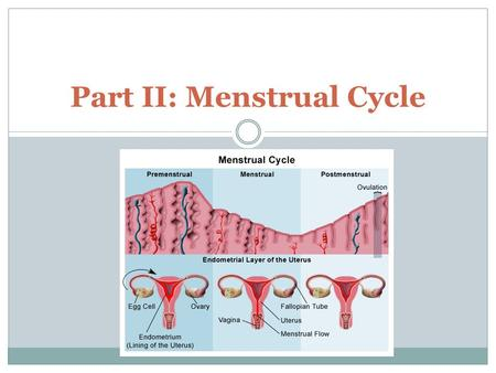 Part II: Menstrual Cycle. Facts about You As a fetus, you have more than 7 million eggs! At birth, 1-2 million are left At puberty, about 300,000 are.