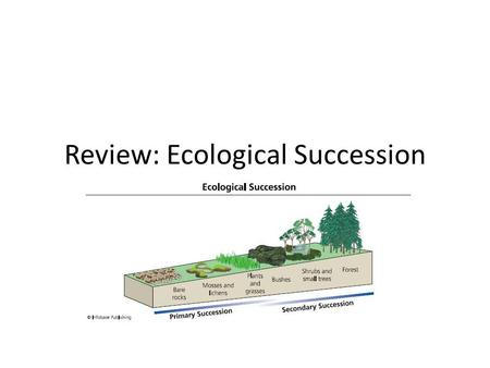 Review: Ecological Succession