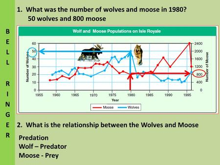 1. What was the number of wolves and moose in 1980?
