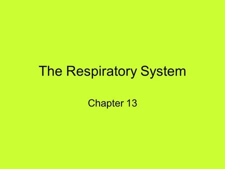 The Respiratory System Chapter 13. PRIMARY FUNCTIONS Exchange gases (oxygen and CO2) Produce vocal sounds Sense of smell Regulation of blood PH.