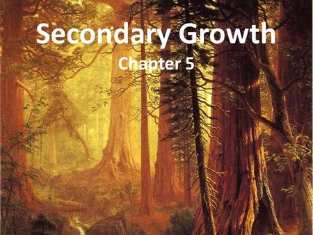 Secondary Growth Chapter 5. Secondary Growth Secondary growth is an increase in girth of a plant initiated by cell divisions in lateral meristems. In.