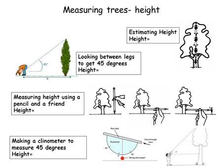 Measuring trees- height Estimating Height Height= Looking between legs to get 45 degrees Height= Measuring height using a pencil and a friend Height= Making.