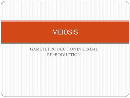 GAMETE PRODUCTION IN SEXUAL REPRODUCTION