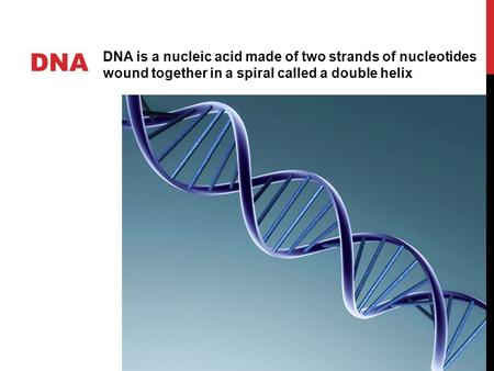 DNA DNA is a nucleic acid made of two strands of nucleotides wound together in a spiral called a double helix.