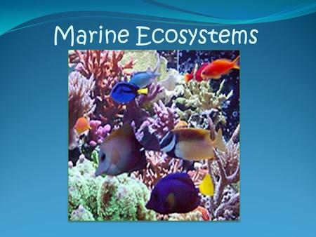 Marine Ecosystems. Estuaries Estuaries are formed where ocean water mixes with fresh water These calm waters contain an abundance of Dissolved Oxygen,