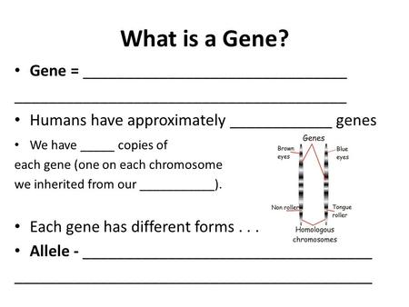 What is a Gene? Gene = _______________________________ _______________________________________ Humans have approximately ____________ genes We have _____.