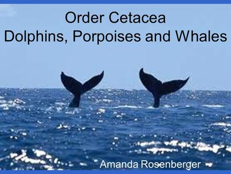 Order Cetacea Dolphins, Porpoises and Whales