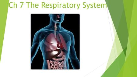 Ch 7 The Respiratory System. Overview  Nose- nas/o- Exchanges air during inhaling and exhaling; warms, moisturizes, and filters inhaled air.  Sinuses-