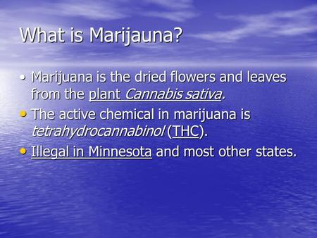 What is Marijauna? Marijuana is the dried flowers and leaves from the plant Cannabis sativa.Marijuana is the dried flowers and leaves from the plant Cannabis.