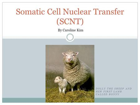 DOLLY THE SHEEP AND HER FIRST LAMB CALLED BONNY Somatic Cell Nuclear Transfer (SCNT) By Caroline Kim.