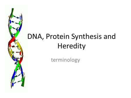 DNA, Protein Synthesis and Heredity terminology. DNA Deoxyribonucleic acid Two strands Found in nucleus of eukaryotic cell Found in cytoplasm of prokaryotic.