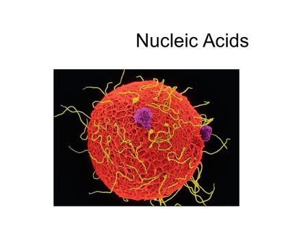 Nucleic Acids. We have studied three other sets of Macromolecules: Carbohydrates, lipids, & proteins The 4 th macromolecule used by organisms: Nucleic.