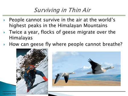 Copyright © 2009 Pearson Education, Inc.  People cannot survive in the air at the world's highest peaks in the Himalayan Mountains  Twice a year, flocks.