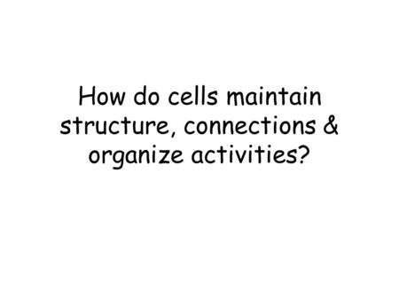 How do cells maintain structure, connections & organize activities?