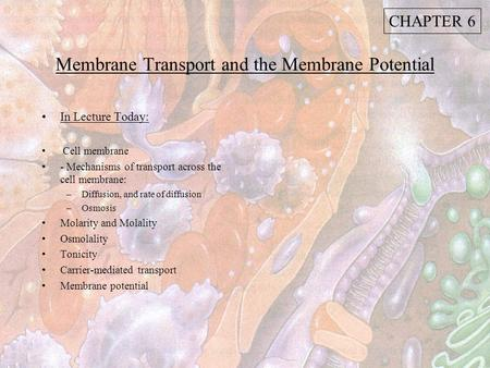 Membrane Transport and the Membrane Potential In Lecture Today: Cell membrane - Mechanisms of transport across the cell membrane: –Diffusion, and rate.