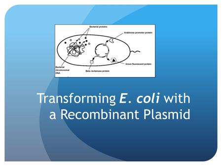 Transforming E. coli with a Recombinant Plasmid. What is biotechnology? Employs use of living organisms in technology and medicine Modifying living organisms.