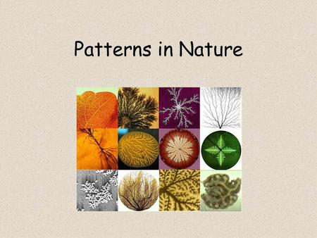 Patterns in <strong>Nature</strong>. Mathematics….& patterns We don't know all the answers unlike in class! Mathematics is a science which looks for patterns <strong>and</strong> structure.