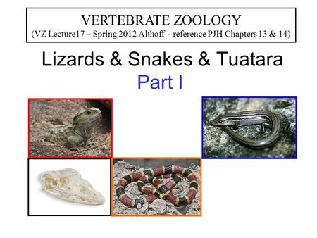 Lizards & Snakes & Tuatara Part I VERTEBRATE ZOOLOGY (VZ Lecture17 – Spring 2012 Althoff - reference PJH Chapters 13 & 14)