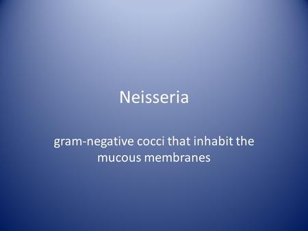 Neisseria gram-negative cocci that inhabit the mucous membranes.