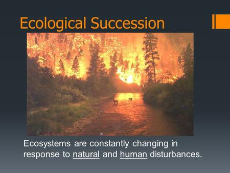 Ecological Succession Ecosystems are constantly changing in response to natural and human disturbances.