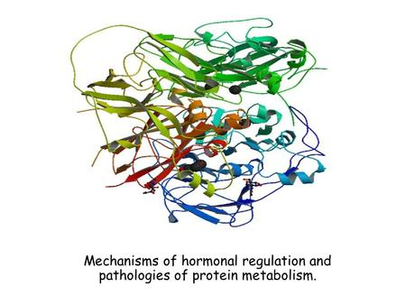 Hormonal regulation of human skeletal muscle protein metabolism